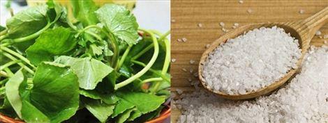 Cách đơn giản để hỗ trợ giảm sưng, giảm ngứa cho các nốt mụn đó là trộn đều rau má với muối tinh sau đó rửa sạch rồi thoa đều lên mặt. Để yên trong vòng 20 phút rồi rửa lại sạch mặt