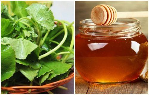 Xoay nhuyễn rau má sau đó trộn đều với mật ong. Thực hiện biện pháp này hàng ngày để hỗ trợ làm mờ các vết sẹo mụn hoặc sẹo thâm