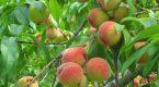 Tận dụng loại trái cây nào để trị mụn tại nhà Đón Tết?