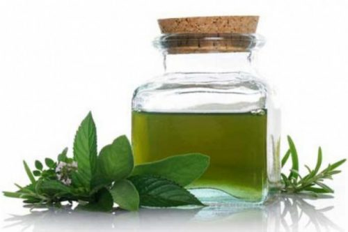 Tinh dầu trà xanh sát khuẩn nên là một trong những cách hỗ trợ trị mụn tại nhà hiệu quả được nhiều người áp dụng
