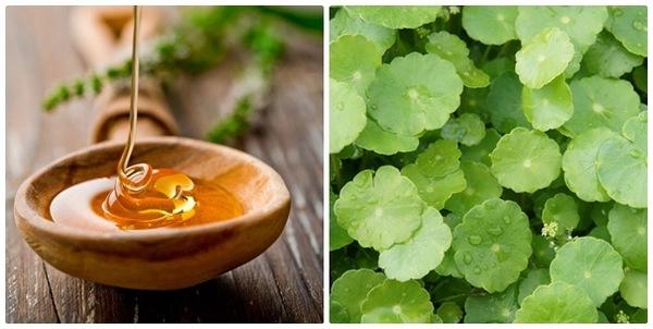 Sự kết hợp của rau má và mật ong chắc chắn sẽ không làm bạn thất vọng với hiệu quả chế biến mặt nạ rau má trị mụn ngừa sẹo