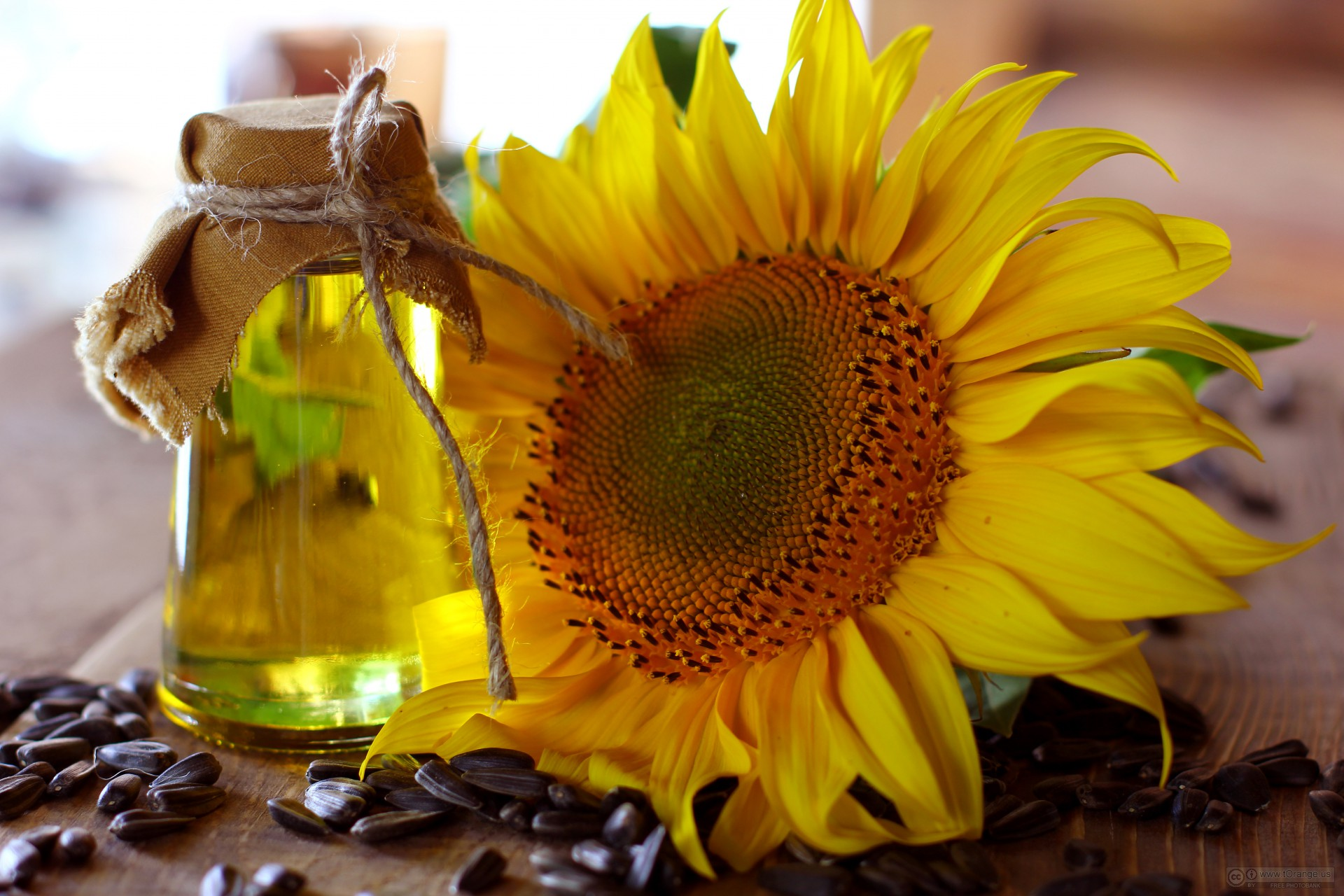 Dầu hoa hướng dương có công dụng chống lão hóa rất tốt cho làn da