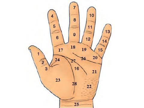 Nốt ruồi trong lòng bàn tay của bạn nằm ở vị trí số mấy?
