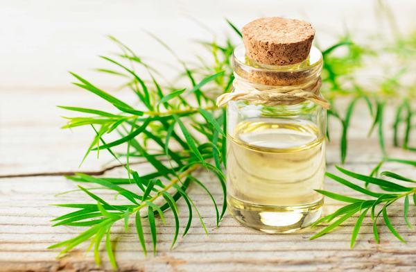 Tinh dầu cây trà rất được yêu thích trong việc điều trị mụn cũng như cách trị thâm do mụn để lại.